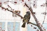 bird_sakura.jpg