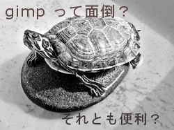 turtle-79410_640.jpg